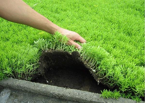 佛甲草屋顶绿化案例