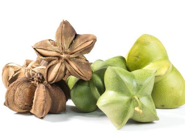 印加果种子多少钱一斤,印加果种子批发价格