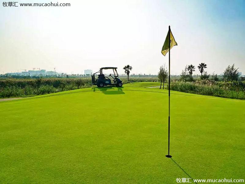 高尔夫球场草坪实拍图片